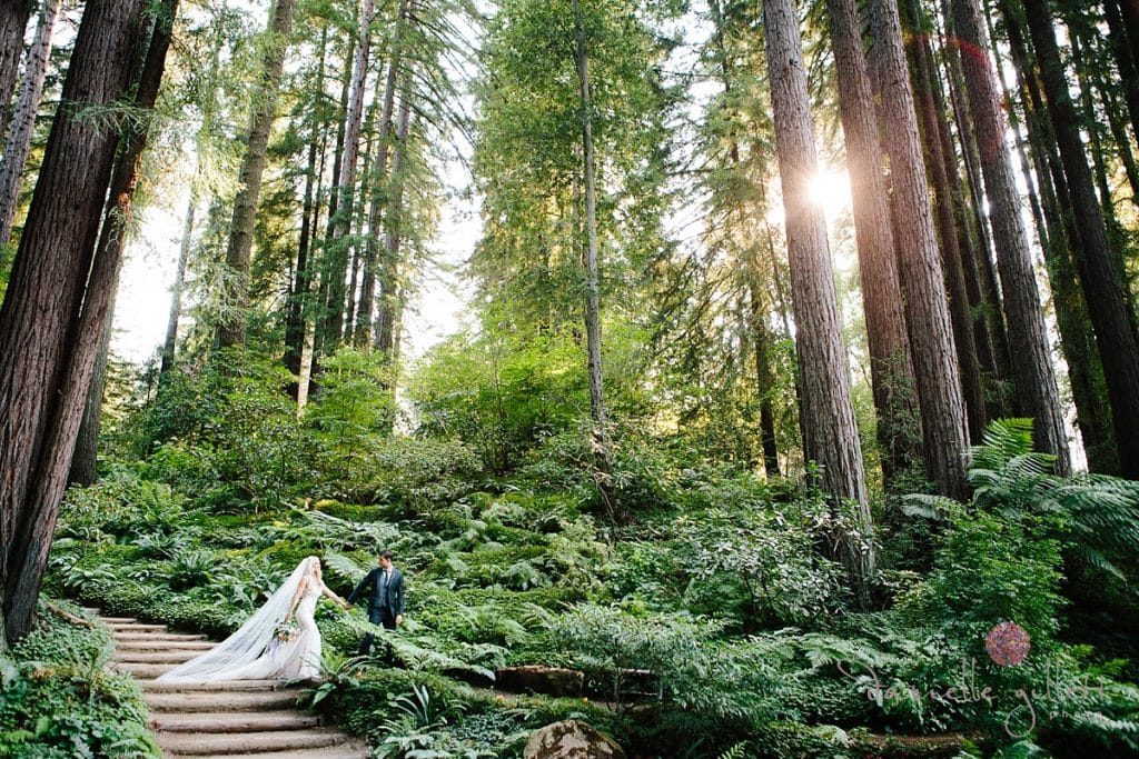 Bride and Groom with redwood trees and sunflare at Nestldown
