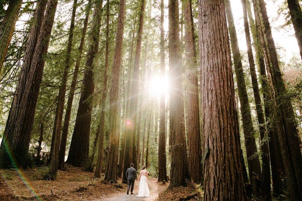 Bride and Groom in Redwoods, Nestldown Wedding Photography, Redwood Wedding in Santa Cruz, Outdoor Wedding, Catholic Indian Wedding, Nestldown Wedding Photographer