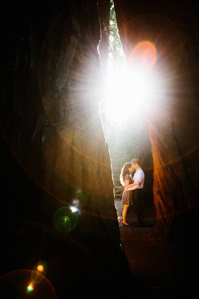 Redwood Engagement Photo. Santa Cruz Engagement Photography